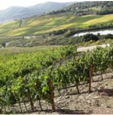 Biggest wine growing region