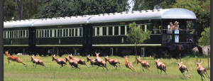 deer running alongside a carriage train